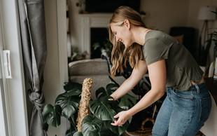 Rastline, ki po feng šuju prinašajo največ sreče in zdravja