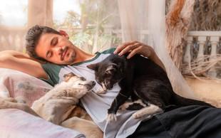 16 neprecenljivih stvari, ki nas jih lahko naučijo mačke in psi