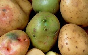 Je zelen krompir zares strupen? Preverjamo!