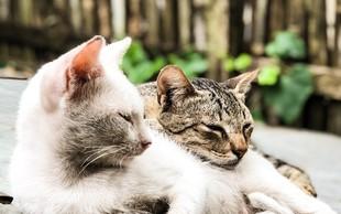 Dobro je imeti več kot eno mačko pri hiši