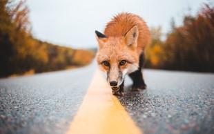Če na poti srečujete te živali, prejemate pomembna sporočila