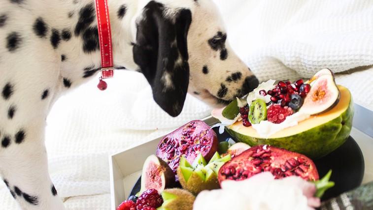 Katera hrana je za pse strupena? (foto: pexels)