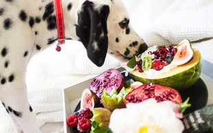 Katera hrana je za pse strupena?