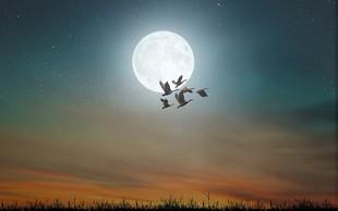 Današnja polna luna je zelo MOČNA (in nosi s seboj tudi zdravilno moč)