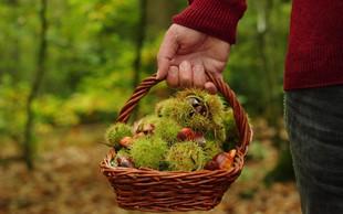 Gozdni bonton (in zakoni) pri nabiranju kostanja
