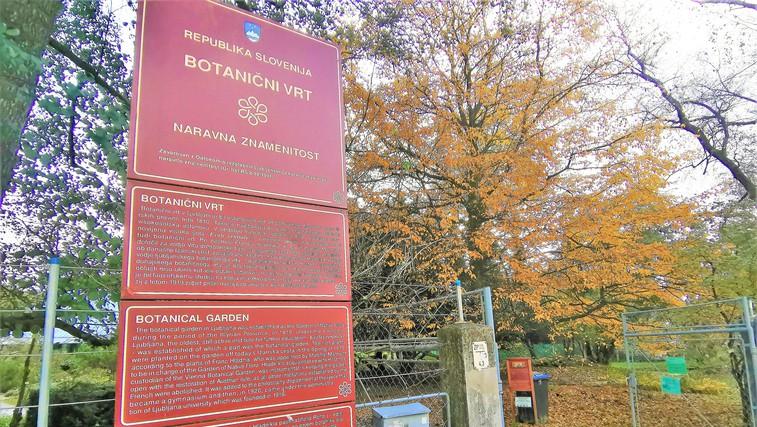 Počitniška ideja za Ljubljančane: sprehod skozi jesenski botanični vrt (foto: DDD)