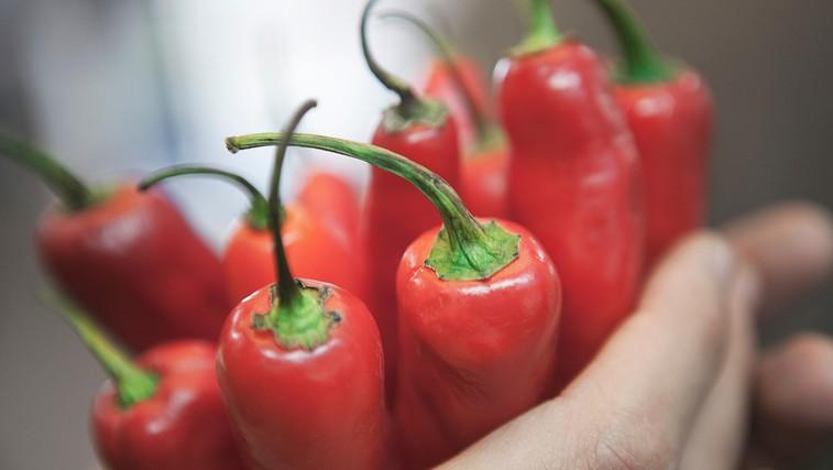 Ljudje, ki redno jedo čili, živijo dlje (raziskava) (foto: Profimedia)