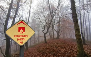 Med karanteno iščemo nove izlete: Debenji vrh pri Ljubljani (530 m)