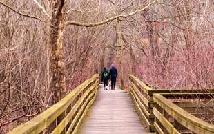 Katerih dobrih učinkov ste deležni, če vsak dan hodite 10, 20 ali 30 minut?