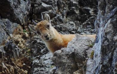 Spoštujmo vse, ki so v gorah doma – rastline, živali in ljudi. 11. december - mednarodni dan gora