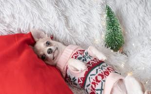 Foto: Vesel božič pravijo tudi živali - oziroma hov hov, muuu, oink!