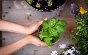 TE rastline v vaš dom prinesejo pozitivno energijo (opremite se za dobro leto!)