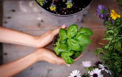 TE rastline v vaš dom prinesejo pozitivno energijo