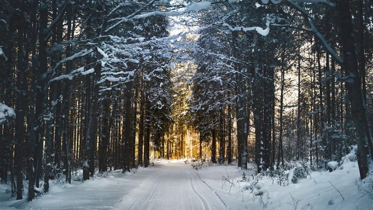 Kako nam lahko pomaga sprehod po gozdu (foto: pexels)