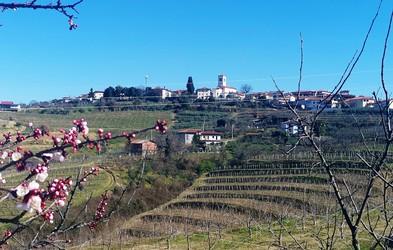 Goriška brda: idilični svet gričev, kjer jo lahko mahnete po poteh češnjevega cveta