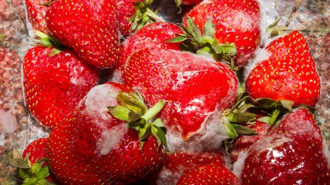 Tudi vi plesen preprosto odrežete oziroma odstranite in živilo brezskrbno pojeste? Nadaljujte z branjem!