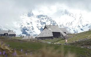 Žafrani na Veliki planini (odlična ideja za skorajšnji izlet)