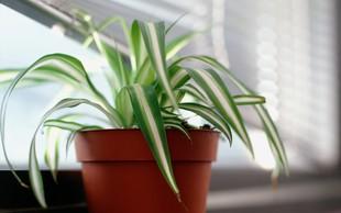 """Džungla v kopalnici: Te rastline obožujejo vlažno okolje in so idealne za vašo """"zeleno kopalniško kolekcijo""""!"""