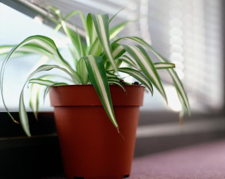 PAJKOVA RASTLINA Ta odporna rastlina uspeva v zelo različnih pogojih in tudi kopalnica ji bo po godu. Zalivajte jo enkrat …