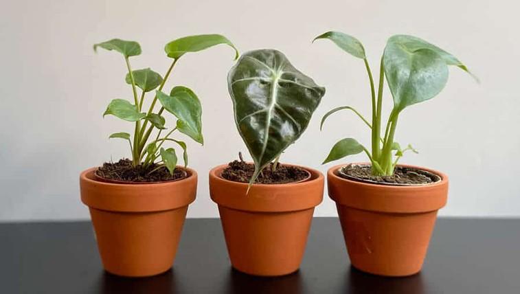 Takšen vpliv imajo zelene in sobne rastline na duševno zdravje (hoteli jih boste imeti še več!) (foto: Sanjski šopek promocijsko gradivo)