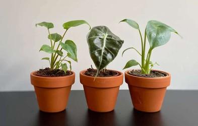 Takšen vpliv imajo zelene in sobne rastline na duševno zdravje (hoteli jih boste imeti še več!)