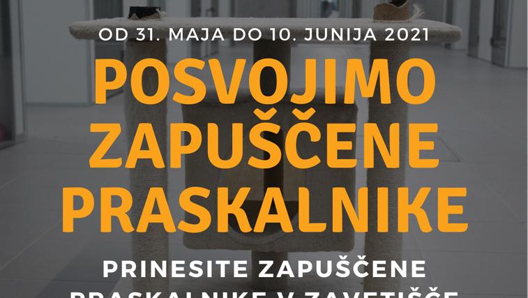 Zavetišče Ljubljana posvaja zapuščene mačje praskalnike. Imate kakšnega doma? (foto: Arhiv)
