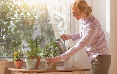 Se zbujate utrujeni? Tu je 6 sobnih rastlin, ki lahko poskrbijo, da boste bolje spali