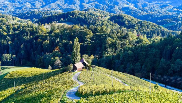 Poznate srce med vinogradi z Instagrama? Brezplačno fotografiranje od zdaj naprej tukaj ne bo več mogoče! (foto: profimedia)