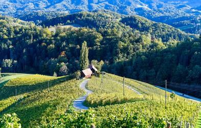 Poznate srce med vinogradi z Instagrama? Brezplačno fotografiranje od zdaj naprej tukaj ne bo več mogoče!