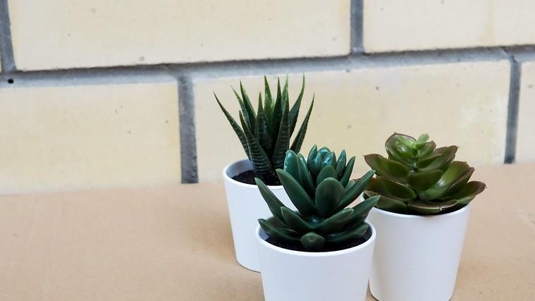Katera rastlina je popolna za vaš tip osebnosti? (Kviz) (foto: Profimedia)