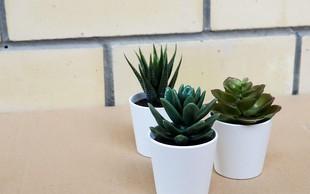 Katera rastlina je popolna za vaš tip osebnosti? (Kviz)
