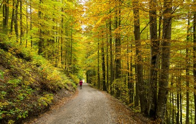 Priporočila za pohodništvo v jeseni: da bo vaš izlet v gorski naravi lepši!