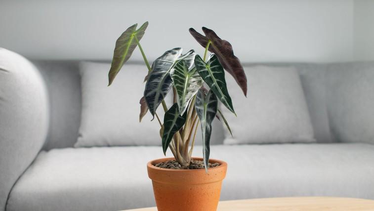 TO je rastlina, ki je POPOLNA za vas! (Glede na vaše astrološko znamenje) (foto: Profimedia)
