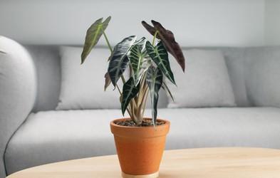 TO je rastlina, ki je POPOLNA za vas! (Glede na vaše astrološko znamenje)