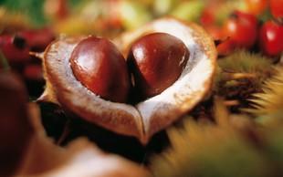 O kostanju malo drugače (in o tem, da je to edini orehasti plod, ki vsebuje vitamin C)