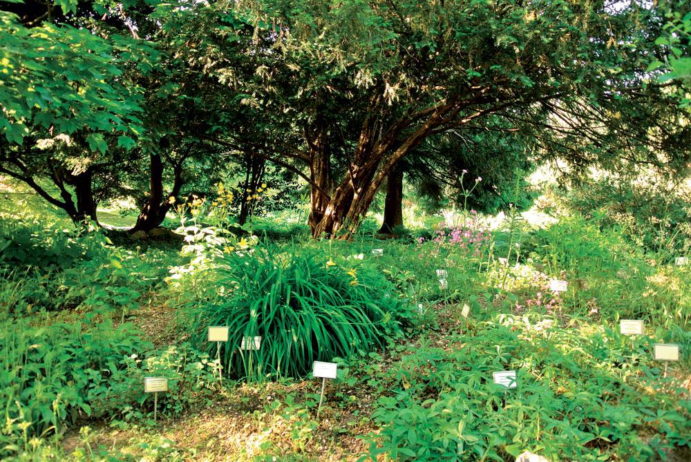 Botanični vrt v Ljubljani